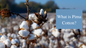 What is Pima Cotton